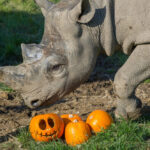 Folly Farm Launch Annual Spooktacular,  with Halloween Fun for Guests and Animals